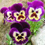 cranky flowers